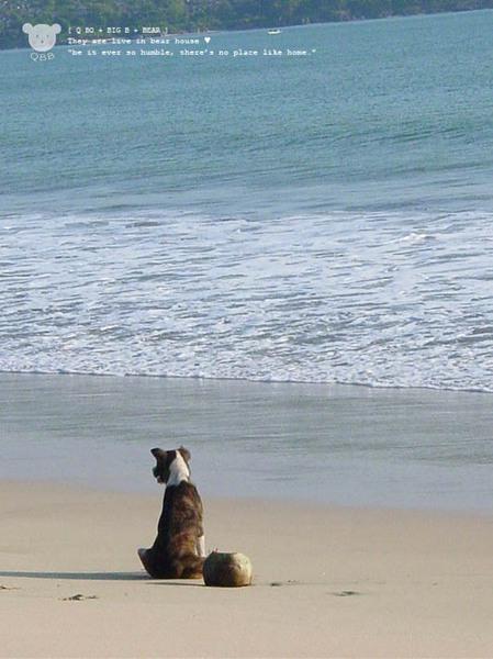 金巴蘭海灘dog1.jpg