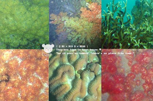 軟珊瑚.jpg