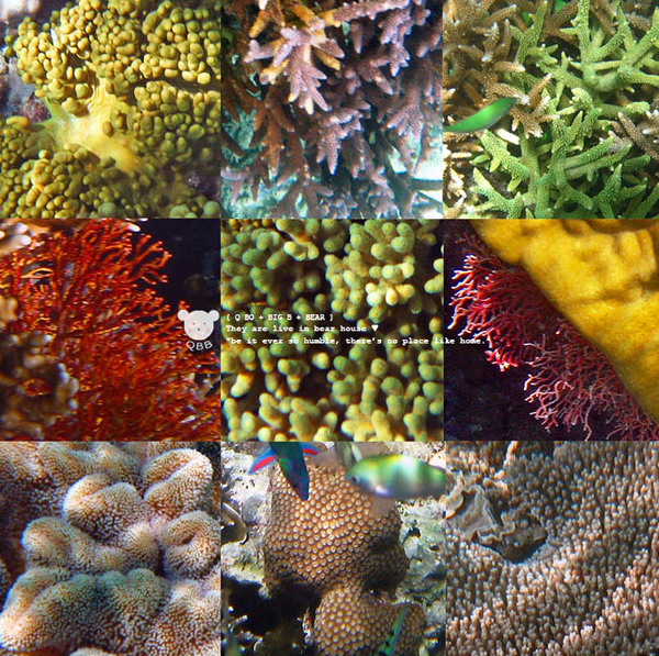 硬珊瑚.jpg