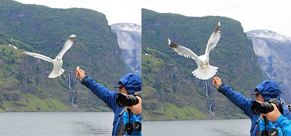 sea bird0.jpg