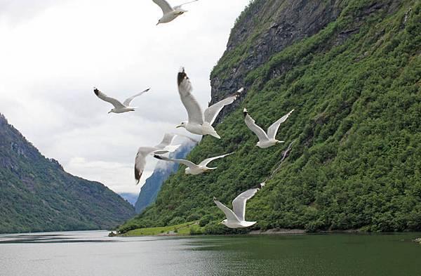 sea bird02.jpg