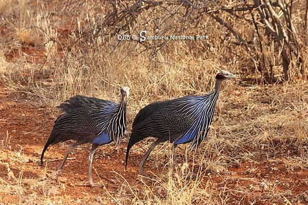 Samburu National Park 02