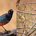 Samburu National Park 03