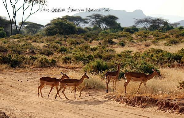 Samburu National Park 04