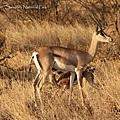 Samburu National Park 05