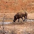 Warthog 0