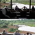 safari in The Ark