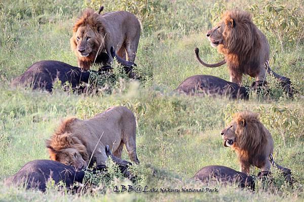LION 0