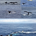 賞鯨.jpg