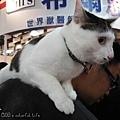 cat0.jpg