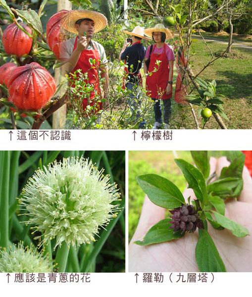 認識植物.jpg