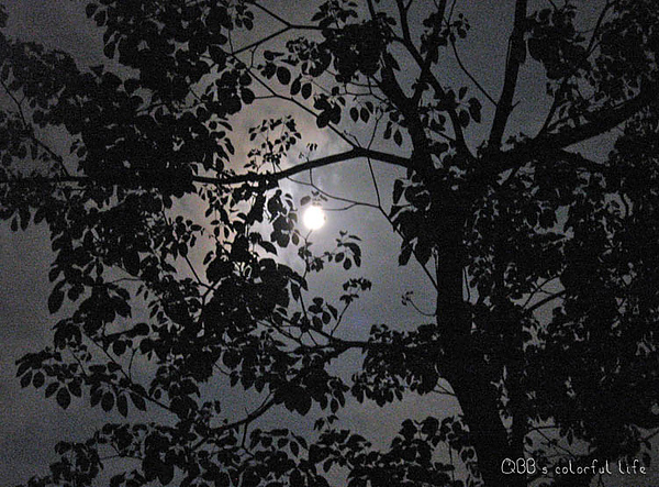 皇后鎮森林-月光.jpg
