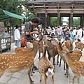 奈良鹿爭食.jpg