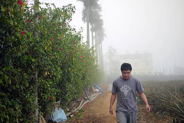 20120309茶園-24