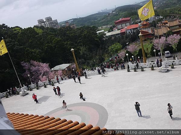 20120321天元宮櫻花-130