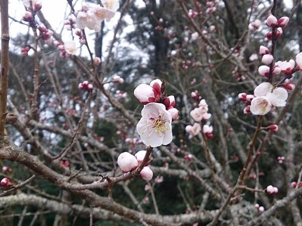 2014-02-04-18-30-44_deco.jpg