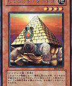金字塔龜.jpg