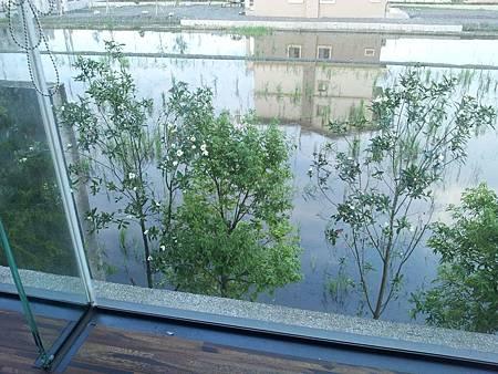 花開了!從窗外望出去,美麗的大頭茶花,也紛紛跟我打招呼呢![呵呵]