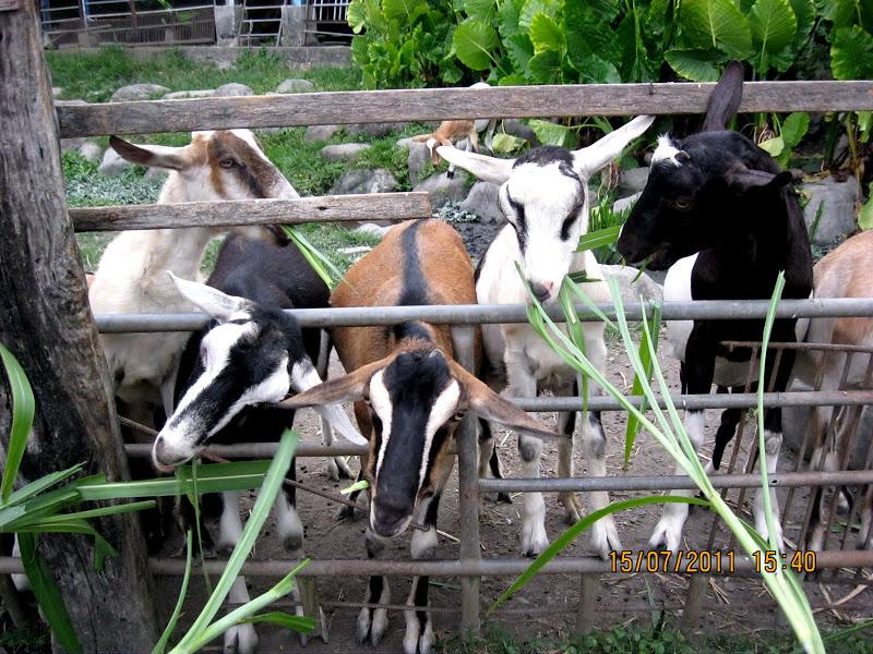 宜農牧場4