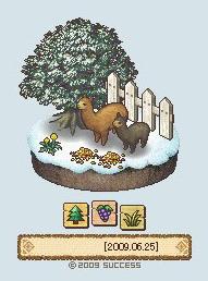 冬天的羊2.jpg