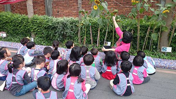 觀察植物 (7).JPG