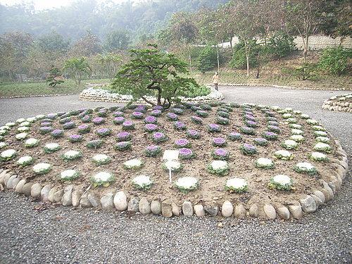 夜牡丹與松樹.jpg