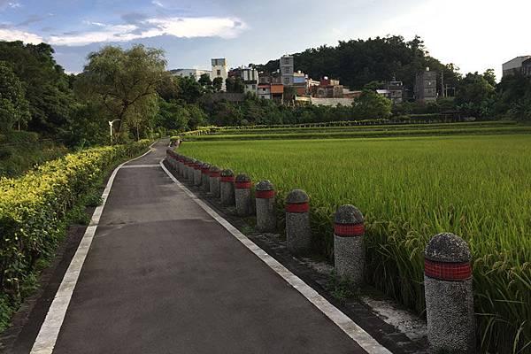 道路-旁邊有稻田,是桃園民宿推薦的自行車道
