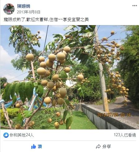 FB貼文、龍眼樹果實_成熟後,可以採摘
