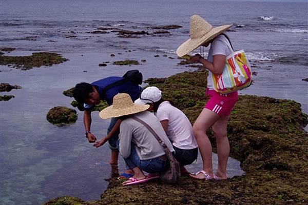 綠島民宿提供,綠島生態解說