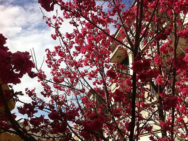 酒店 櫻花