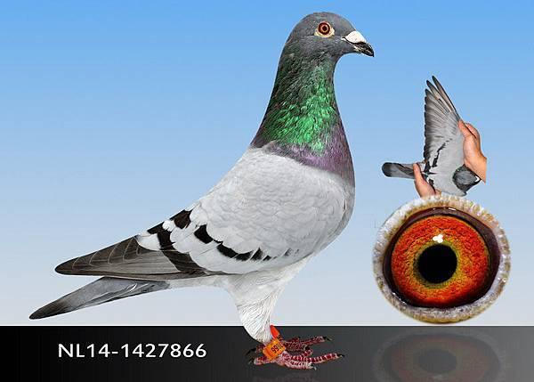 5-NL14-1427866