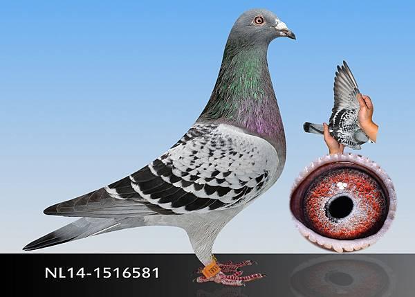 11-NL14-1516581