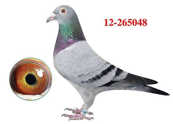 1.12-265048h