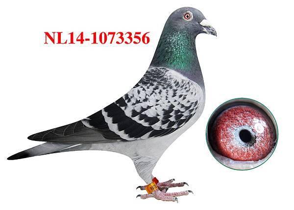 1.NL14-1073356h