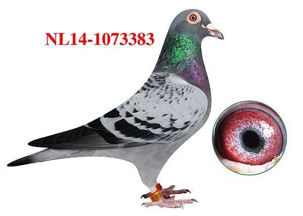7.NL14-1073383h