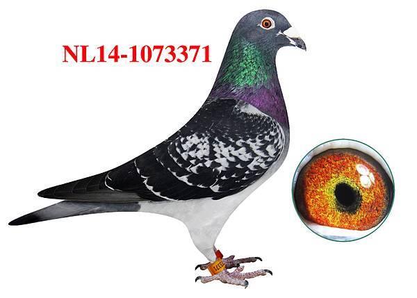 8.NL14-1073371h