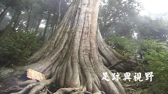 巨木.JPG