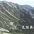 22森林界線.JPG