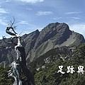 23主峰下的玉山圓柏.JPG