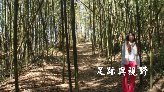 25從棧道起點旁的小徑走去,一大片的竹林躍然眼前.JPG