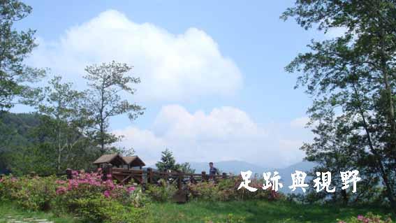 10夏季百花盛放.JPG