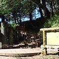 21檜山巨木步道.JPG