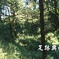 22檜山巨木步道入口後的小平檯