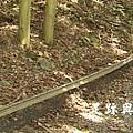 24鐵軌的遺跡.JPG