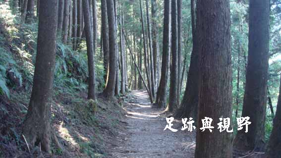 25檜山巨木步道