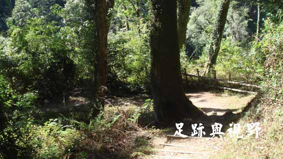 32天然闊葉林.JPG