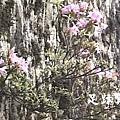 37山璧上的杜鵑花.JPG