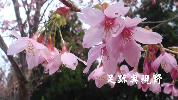 20110220本土呼~芋仔蕃薯呼~.JPG