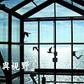 東引遊客中心黑尾鷗展出空間