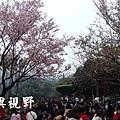 16這一棵是目前最盛開最漂亮的櫻花.JPG